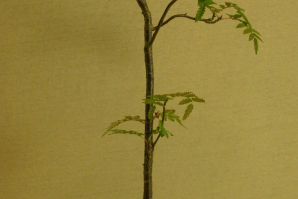 Rowan 25cm tall in Walsall Studio pot